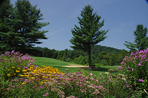 Spring, Summer and Fall offer great opportunities for mountain biking on the Sugar Mountain Resort trail system, scenic rides on the Resort chair lifts, golfing and tennis in the Village, and wonderful expeditions on the Blue Ridge Parkway and nearby Grandfather Mountain.