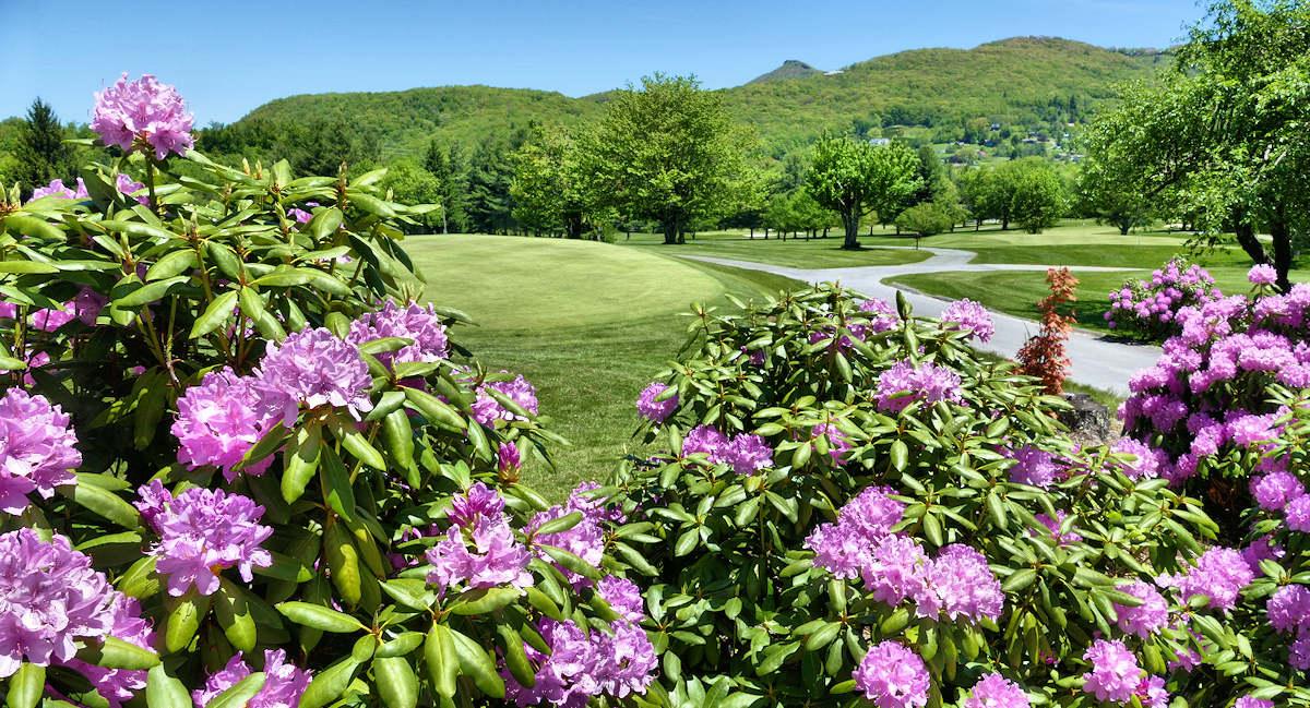 Spring Sugar Mountain Blue Ridge