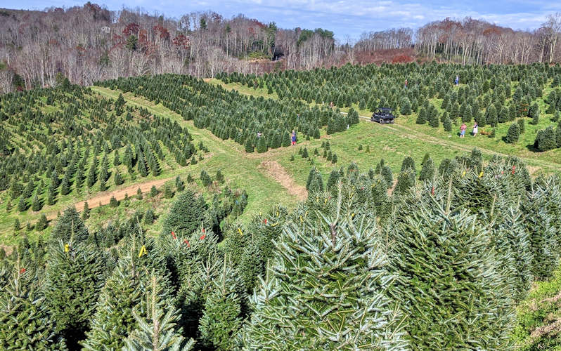 Elk River Evergreen Christmas Tree Farm