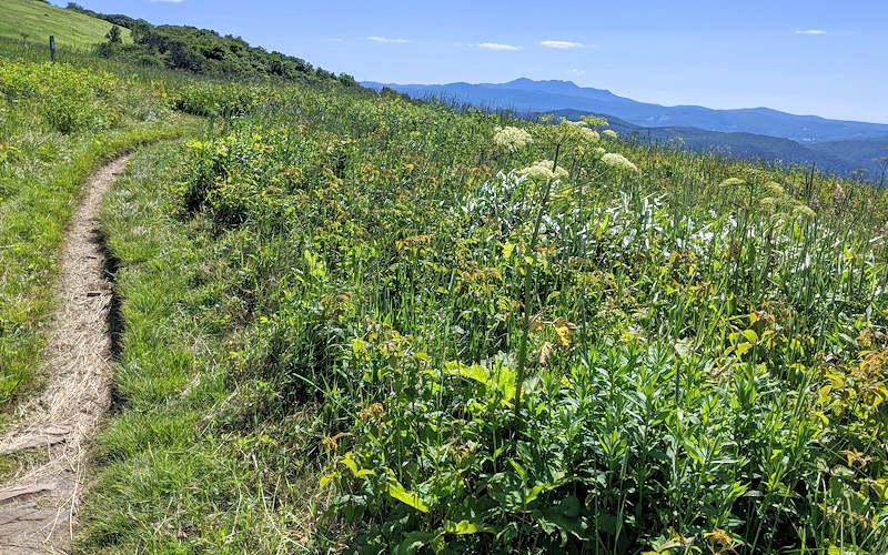 Appalachian Trail NC Little Hump